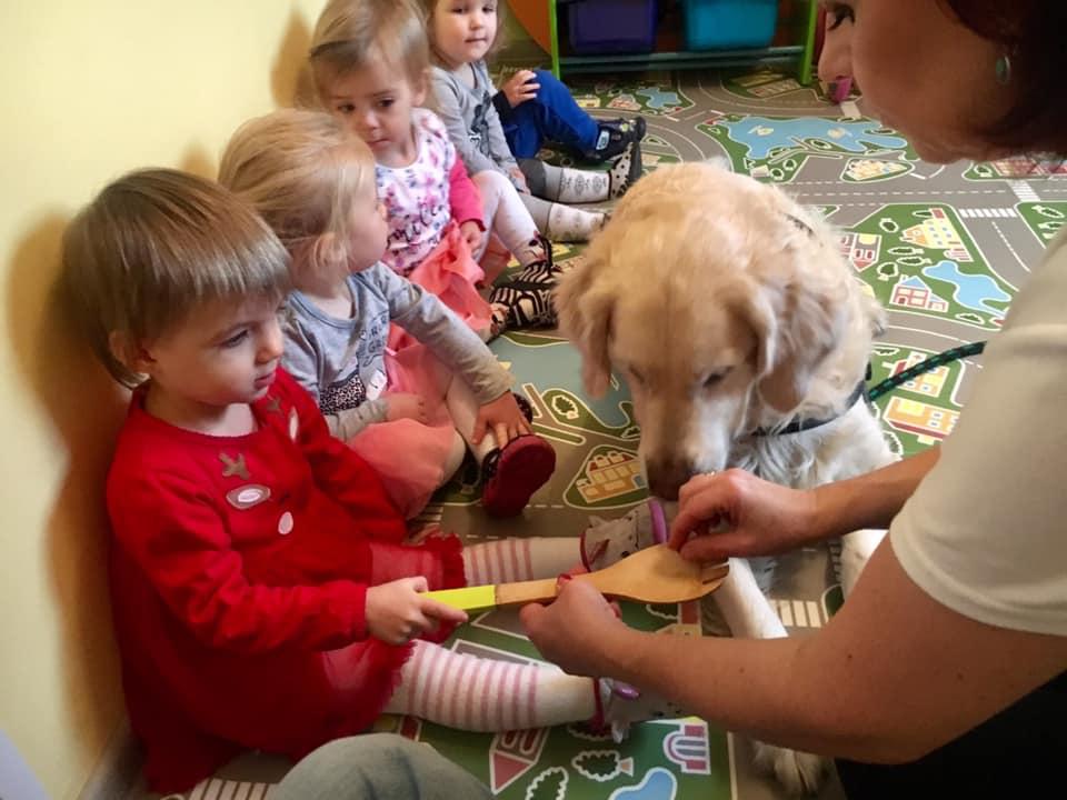 Read more about the article Przedszkole ZUCHOLANDIA kreatywne dziecko w Luboniu – Dogoterapia